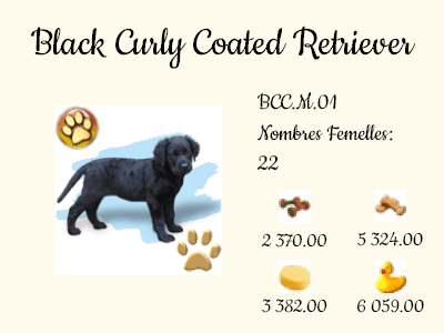 BCC.M.01-Black_Curly_Coated_Retriever.png