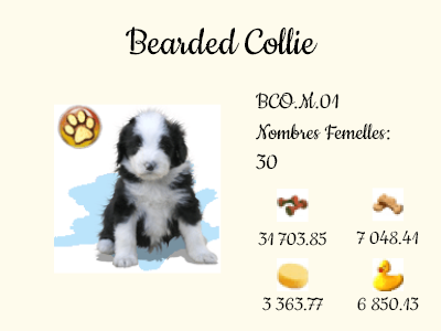 BCO.M.01-Bearded_Collie.png
