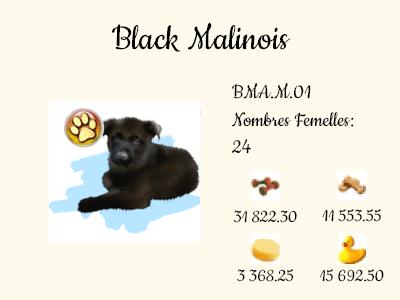 BMA.M.01-Black_Malinois.png