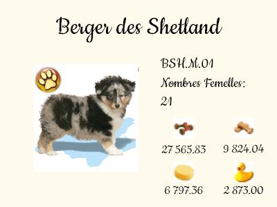BSH.M.01-Berger_des_Shetland.png