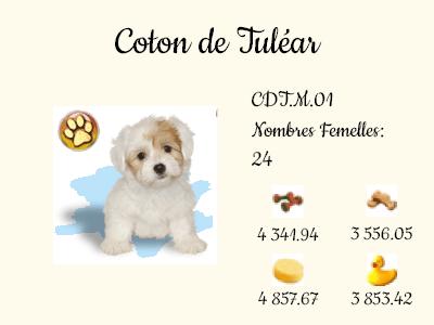 CDT.M.01-Coton_de_Tulear.png