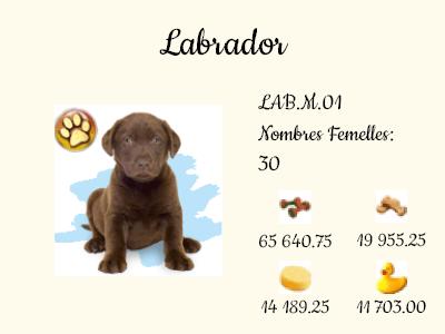 LAB.M.01-Labrador.png
